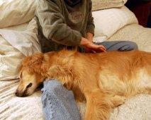 Geef je hond een massage