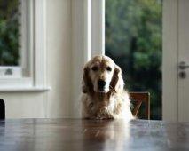 Geef je je hond wel gezonde en veilige voeding