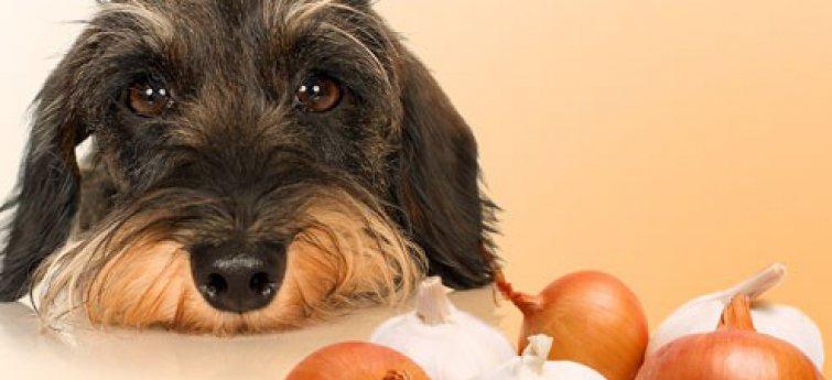Gevaarlijke voeding voor honden