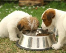 Gezonde hondenvoeding