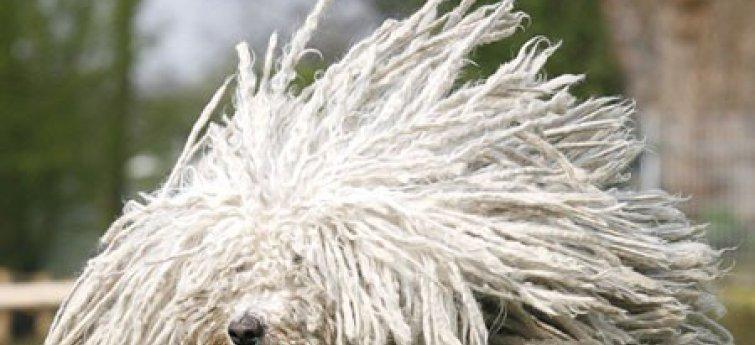 Haarverlies bij honden