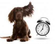Hebben honden tijdsbesef?