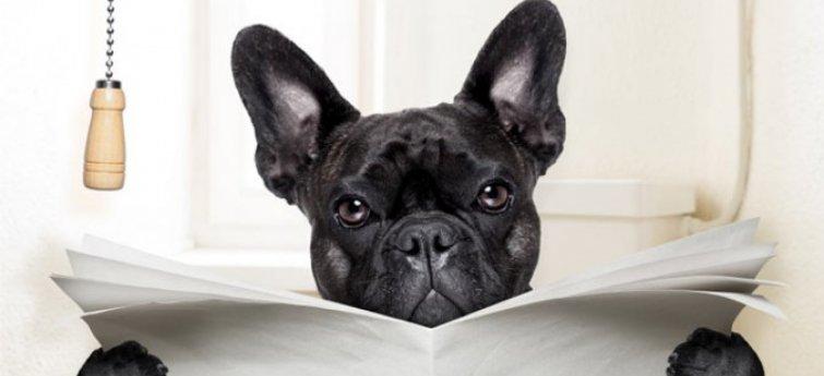 Heeft je hond diarree?