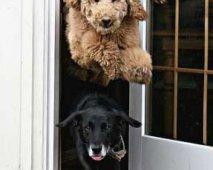 Hond voordeur