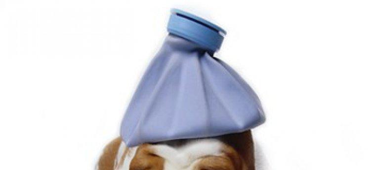 Herken een ziekte bij je hond