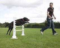 Het belang van herhaling tijdens het trainen van de hond