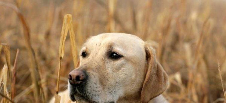 Heupdysplasie of HD bij je hond?