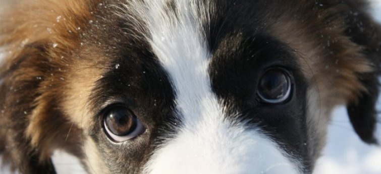 Puppy ogen
