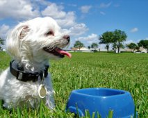 Hoe kan je je hond goed trainen?