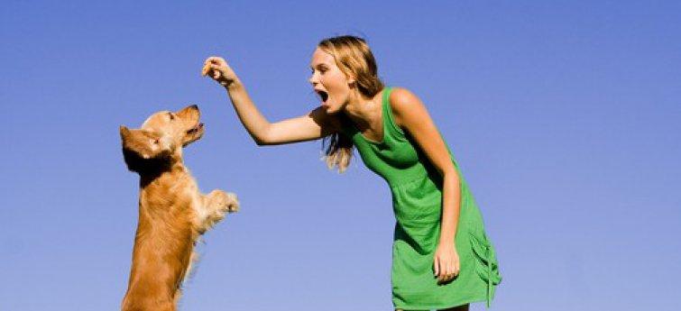Hoe kies je de juiste hond?