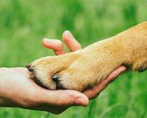 Hoe knip ik veilig de nagels van mijn hond?