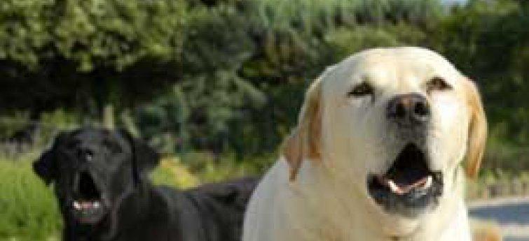 Hoe laat je je hond stoppen met blaffen? Enkele tips