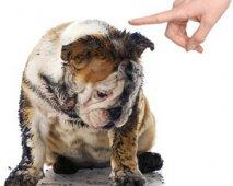 Hoe pak je het slecht gedrag van je hond aan?