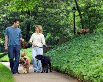 Discussie: Hoe vaak moet je je hond uitlaten? Wat denk jij er van?