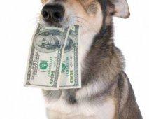 Hoeveel kost een hond?