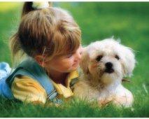 Hoe vertel je een kind dat zijn/haar hond dood is?