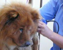 Junior wordt Senior: hoe verzorg ik mijn ouder wordende hond?