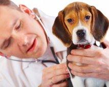 Hoe vind je een goede dierenarts?
