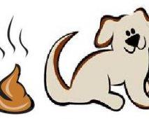 Hond en poep