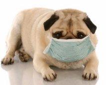 Hondenallergie
