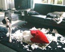 Honden en ongewenst gedrag: Een top vijf