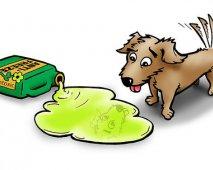 Honden en vergiftiging
