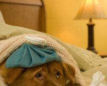 Hondengriep