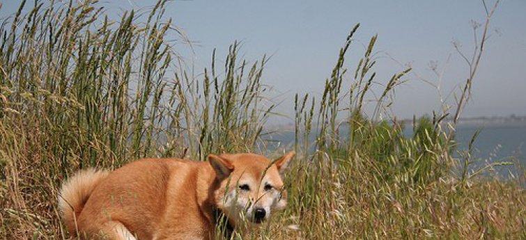 Hondenincontinentie