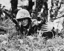 Honden in een oorlog (Oorlogshonden)