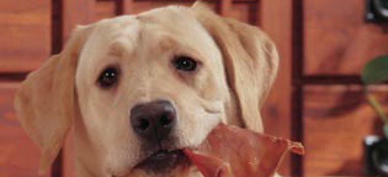 Hondensnacks: Varkensoren, een echte lekkernij voor je hond