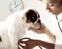 Hondenverzekering: Verzeker je hond en slaap op beide oren? Of toch niet?