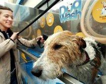 Honden wassen in een handomdraai