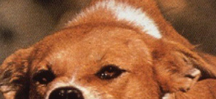 Hondsdolheid