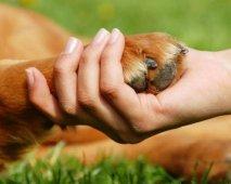 "Hond ""pootje"" geven"