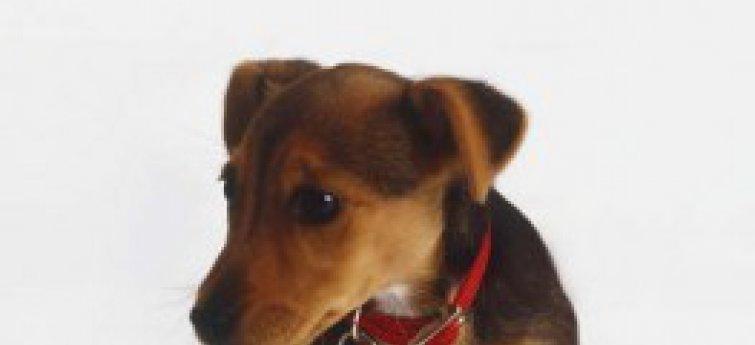 Infectie aan de urinewegen bij honden
