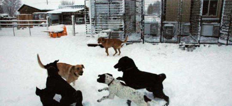 Is jouw hond klaar voor de winter?
