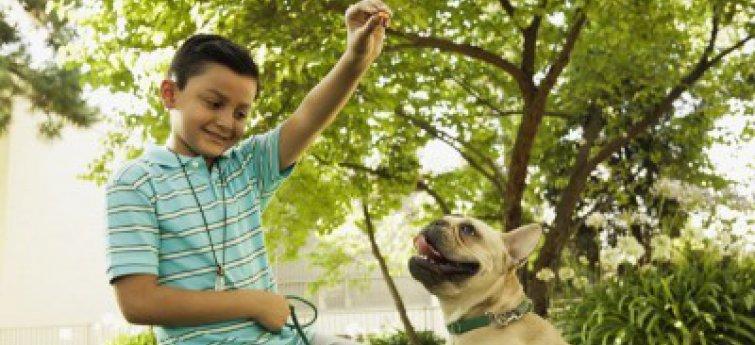 Franse Bulldog en kind