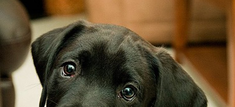 Je eerste hond, hoe ga je ermee om?