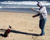 Je hond belonen met een gezond snoepje