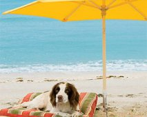 Je hond beschermen tegen de gevaren van de zon