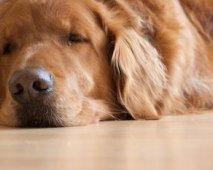 Je hond en de ziekte van Lyme