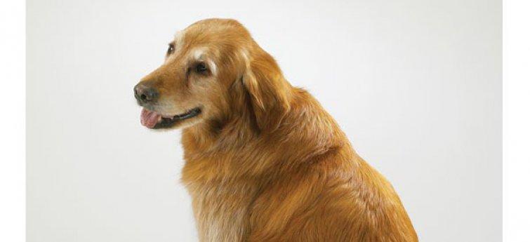 Je hond en incontinentie