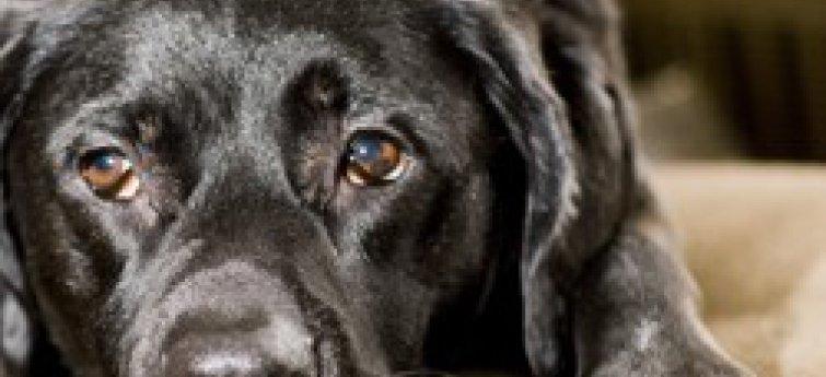Je hond en kanker