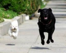 Je hond fit houden