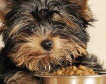 Je hond heeft honger? Enkele voedingstips...