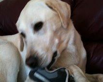 Je hond kauwt op alles, hoe stop je hem?
