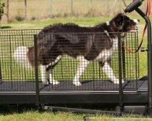 Je hond op de loopband