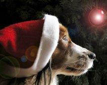 Je hond tijdens de feestdagen