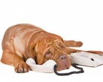 Hond aan de telefoon