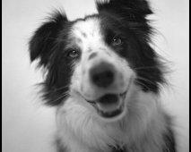 Je hond verzorgen, een snelle handleiding